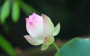 第三世多杰羌佛办公室 第六号来函印证 (12/26/2013)