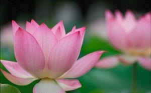 第三世多杰羌佛说法:《心动著境即是魔,随缘分别则无定》