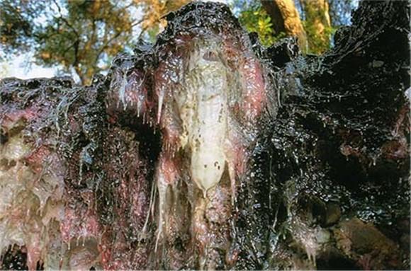 第三世多杰羌佛工巧明展显之玄妙彩宝雕 第5张
