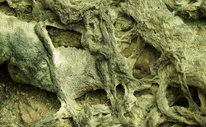 第三世多杰羌佛五明成就 工巧明之枯藤古化